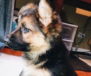 animal, dog, and dog puppy image