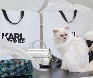 cat, cats, and designer image