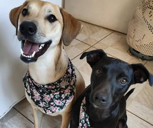 dog, cute, and lindos image