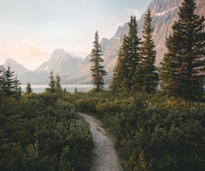 forest, green, and landscape image