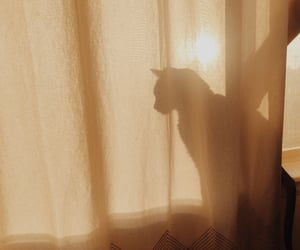 cat, aesthetic, and sun image