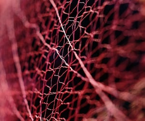 burgundy, netting, and frayed image