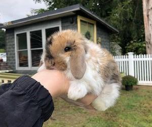 animal, pet, and rabbit image
