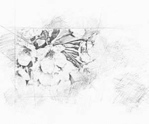 cherry, scribble, and sketch image