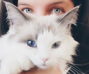 blue eyes, cat, and cat eyes image