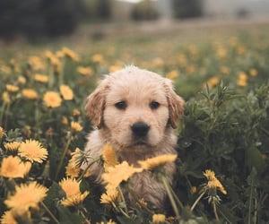 dog, pet, and animals image