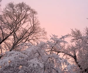 winter, pink, and tree image