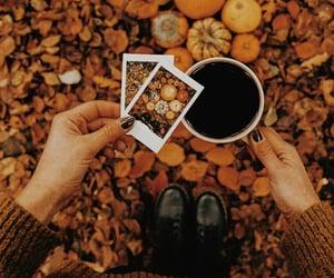 autumn colors, pumpkin, and autumn leaves image