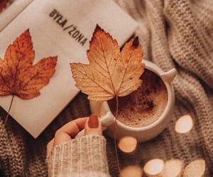 autumn colors, fall colors, and autumn leaf image