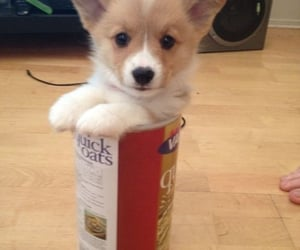 dog care, guide for dog care, and dog care guide image