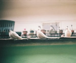 35mm, film, and filmphotography image