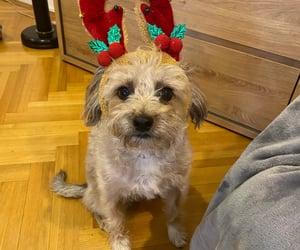 antler, christmas, and dog image