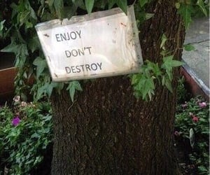 nature, tree, and enjoy image
