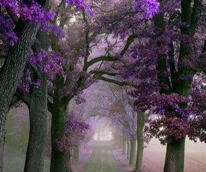 amazing, fog, and garden image