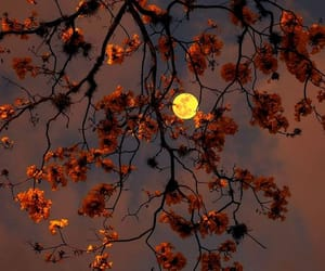 moon, nature, and flowers image