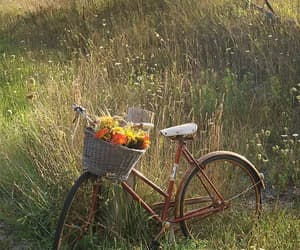 flowers, aesthetic, and bike image