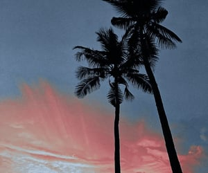 beach, california, and palm tree image