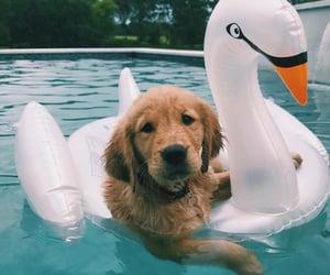 animals, dog, and Swan image