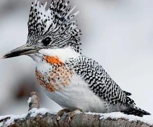 зима, красиво, and Пятна image