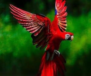 красный, красиво, and Полёт image
