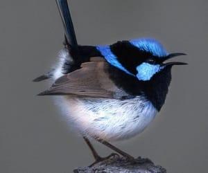 фото, птица, and красиво image