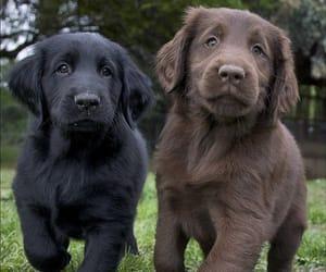 собаки, мило, and щенки image