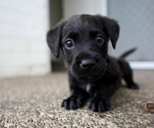 dog health problem image