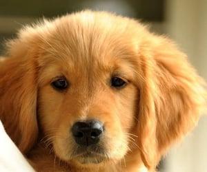 dog care tips, dog caring tips, and dog tips image