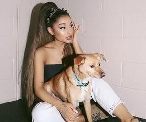 comfortable, doggy, and makeup image