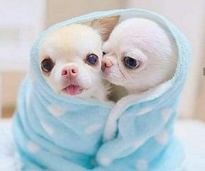 baby, dog, and hug image