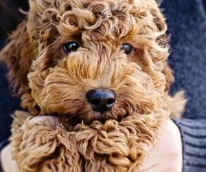 dog caring tips image