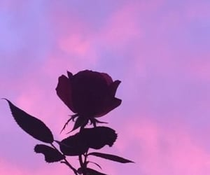 nature, purple, and rose image