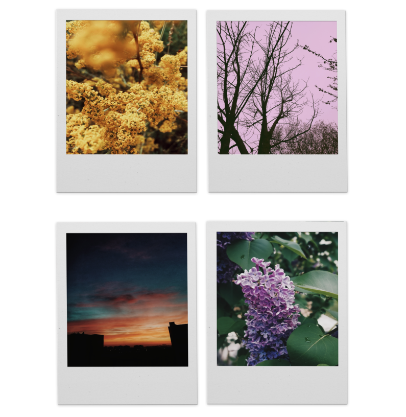 floral, nature, and photography image