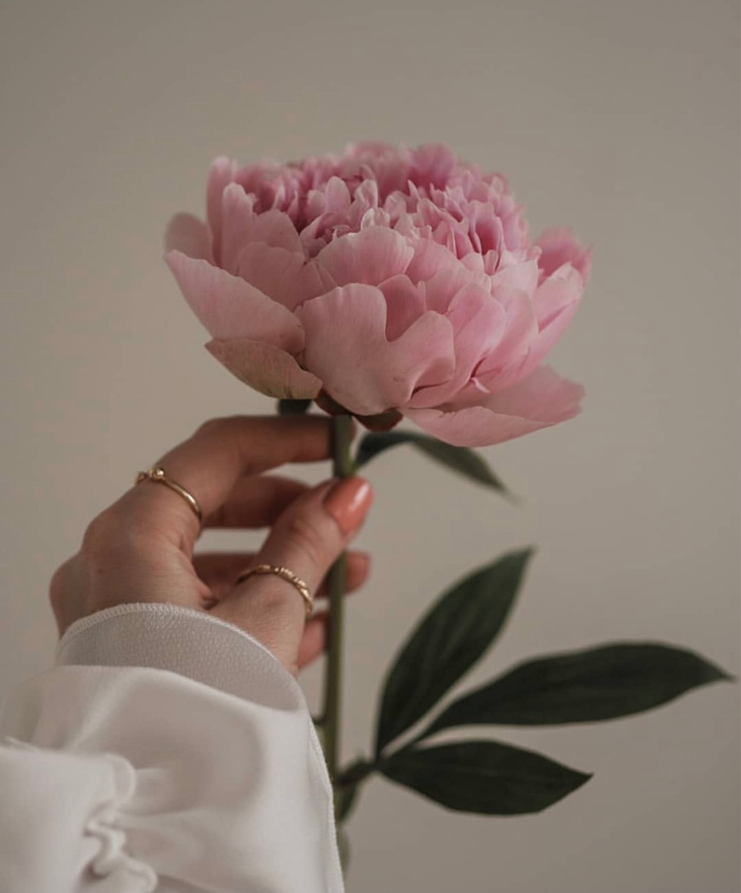beautiful, flower, and nails image