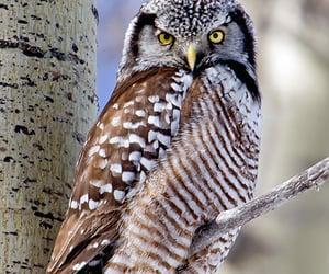 birds, animals, and owl image