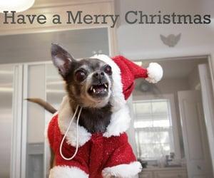 christmas, humor, and dog image