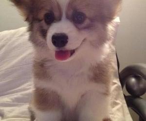 dog tips and dog caring tips image