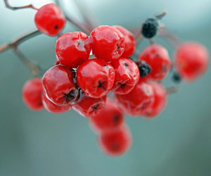 autumn, beauty, and berry image