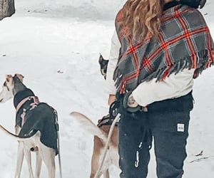 blonde, sami, and dogs image