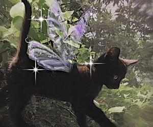 cat, black, and fairy image