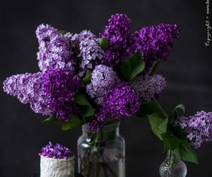 flores, lilac, and flowers image