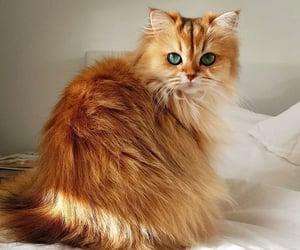 cat, kittens, and shameless reblog image