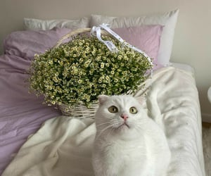 bed and cat cats image