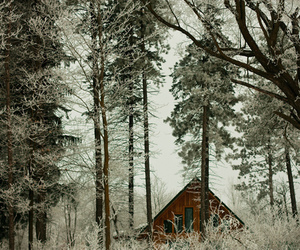 cottage, forest, and trees image