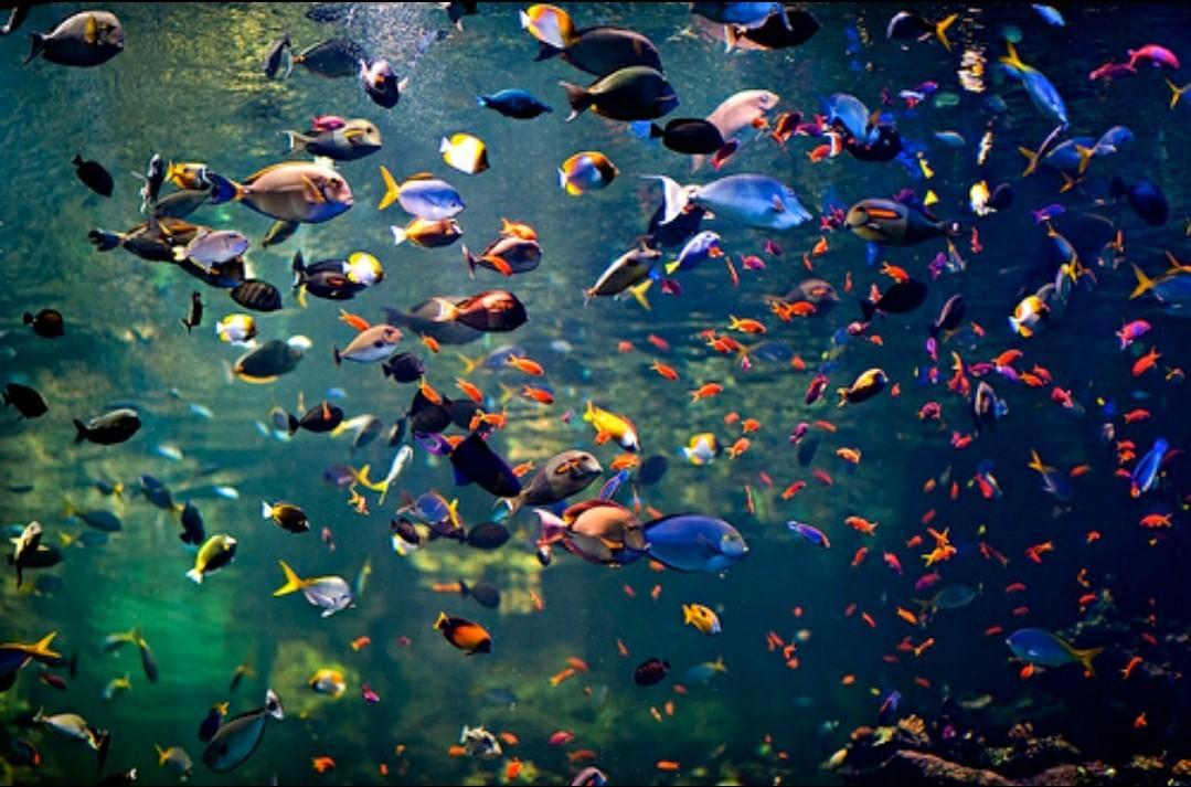 tropical, aquarium, and article image