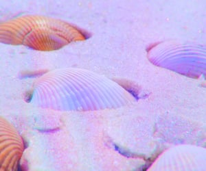 beach, rainbow, and shell image