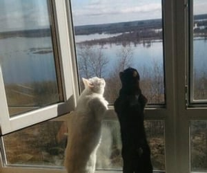 cats, sunshine, and pets image