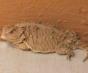 animals, lizards, and reptiles image
