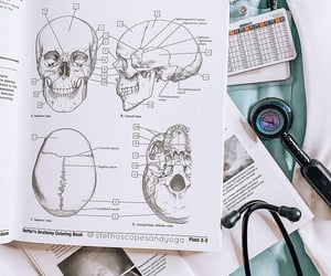 anatomy, books, and college image