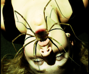 spider, horror, and creepy image